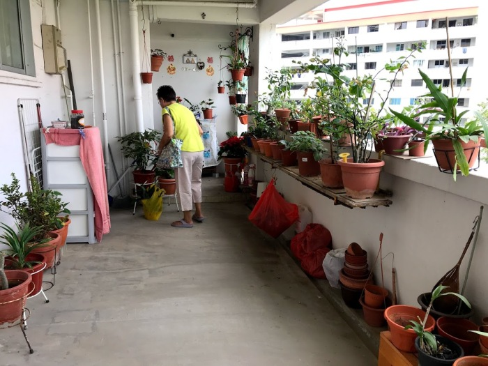 Aunty D's corridor of plants.jpg
