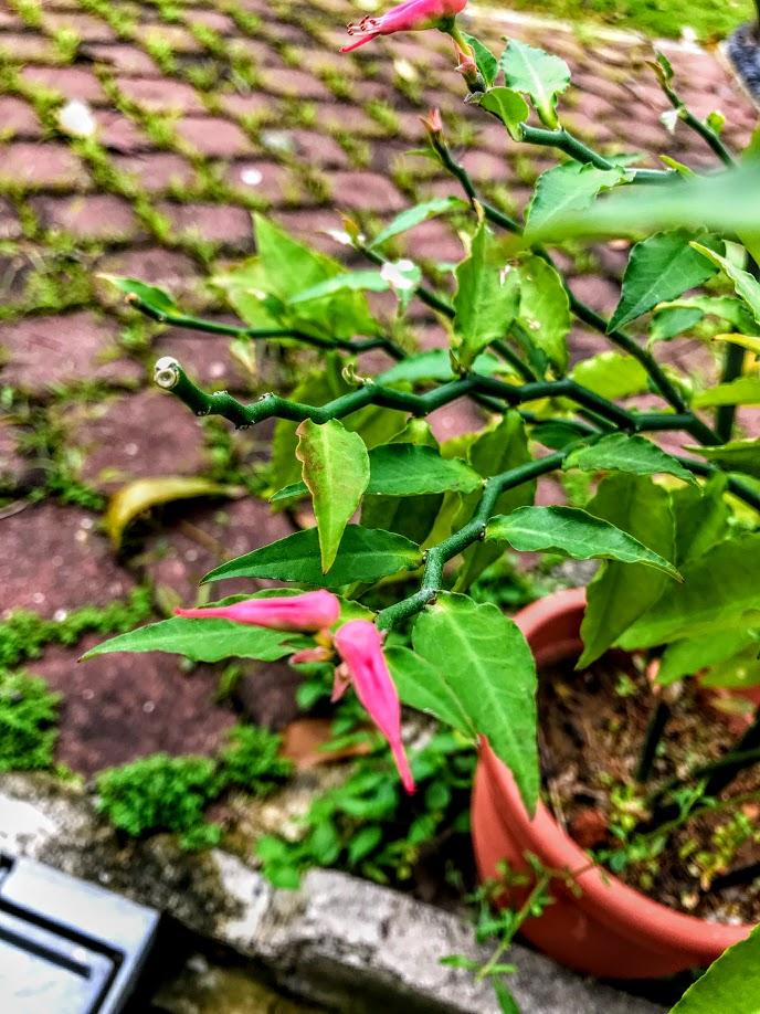 Birdie plant 1.jpg