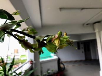 Green birdie plant